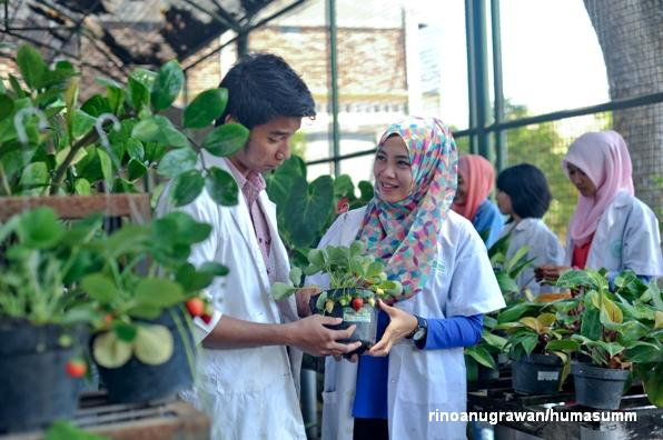 Umm Farm Laboratorium Berbasis Kewirausahaan Berita Universitas