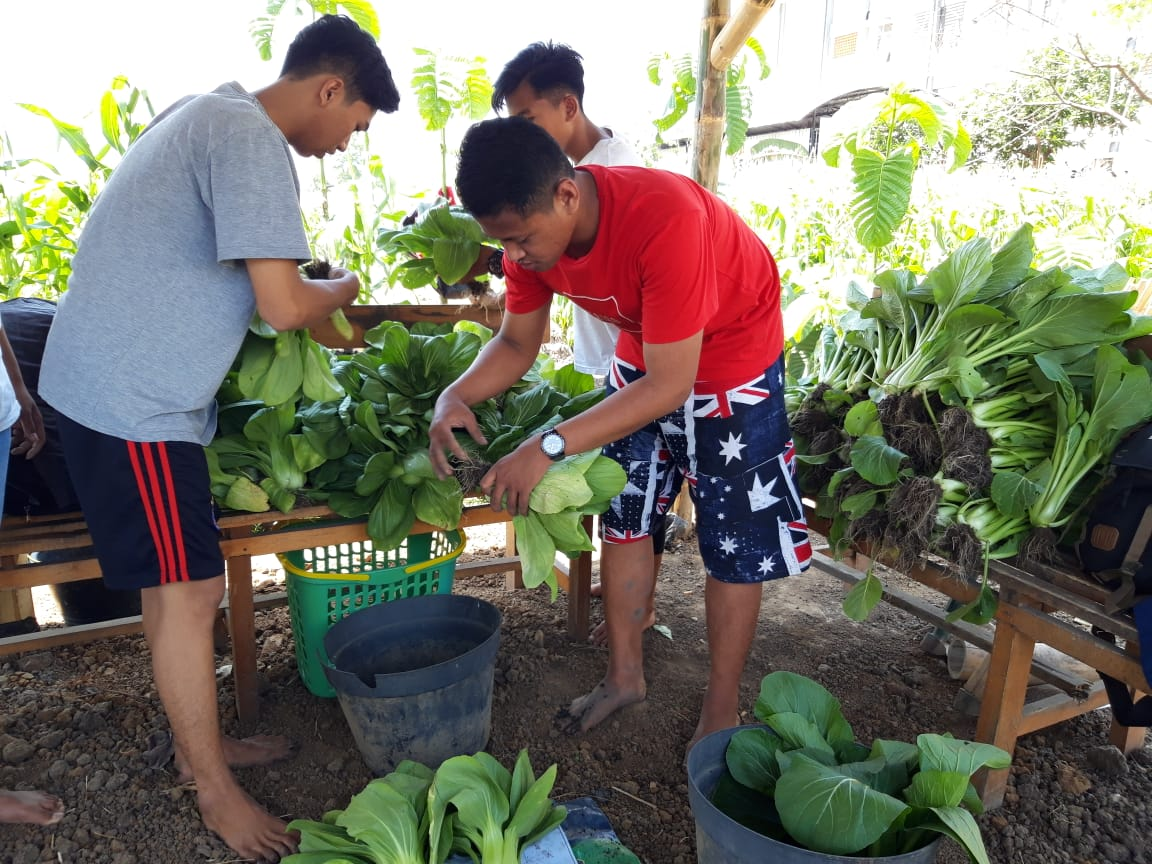 UMM Agribusiness Students harvested healthy vegetables (Photo: Mirza / PR) The tourism places had been